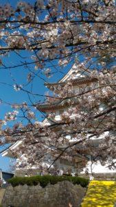 3月30日の千葉城の桜
